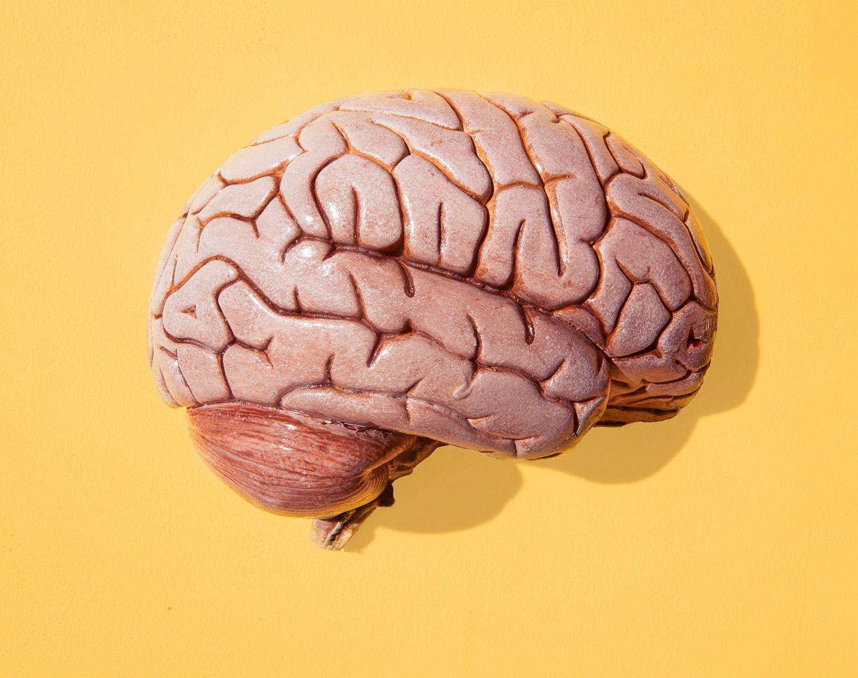 cerveau et ménopause